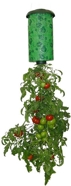 Tomato-planter[1]